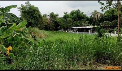 ขายที่ดินเปล่า 3 แปลงติดกัน 120 ตรว.บ้านบึง ชลบุรี
