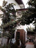 ขายบ้านพร้อมที่ดินบนเนื้อที่ 100 ตารางวา ในซอยจรัญสนิทวงศ์43 (เหมาะสำหรับครอบครัวใหญ่)