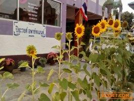 ห้องว่างให้เช่า บรรยากาศดี สังคมดี ราคาไม่แพงจ.นนทบุรี 2