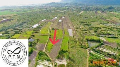 ขายที่ดินทำเลทอง แบ่งแปลงราคาถูก หลังมหาวิทยาลัยศิลปากร สาขาชะอำ ต.สามพระยา อ.ชะอำ จ.เพชรบุรี ห่างจากถนนบายพาสหัวหิน-ชะอำ 500 เมตร