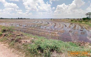 ขายที่ดินเปล่า 9 ไร่ ติดคลองแม่ลา บางกระบือ เมือง สิงห์บุรี
