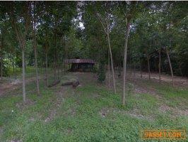 ขายที่ดินสวนยางพารา 13 ไร่ 2 งาน  61.7 ตารางวา   อำเภอ ถลาง จังหวัด ภูเก็ต ใกล้โรงเรียนป่าครองชีพ
