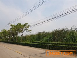 ขายที่ดินติดถนนพุทธบูชา 39   เนื้อที่ดิน 3-2-75 ตรว.