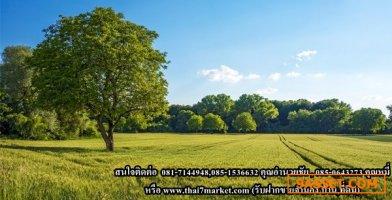 ขายที่ดินจัดสรร ถ.ทางหลวงชนบท นครราชสีมา3052 เนื้อที่ 80-140 ตารางวา  ราคาตารางวาละ 1,875 บาท