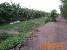 ขายที่ดินหนองเสือ คลอง11 เนื้อที่ 25ไร่ เป็นสวนกล้วย ใกล้ ถนนลาดเรียบคลอง11 หนองเสือ ทำดี เหมาะเกร็งกำไรในอนาคต