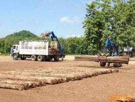 NK-016 ขายที่ดินพร้อมไม้สักทั้งหมด 23 แปลง รวมเป็นเนื้อที่ 2,010 ไร่ จังหวัดเพชรบูรณ์