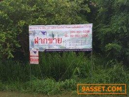 ขายที่ดินแปลงสวยมีถนนสาธารณะล้อมรอบ อ.ศรีราชา  จ. ชลบุรี