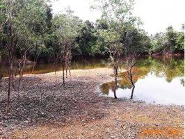 ขายที่ดินบ่อน้ำ 10-3-82 ไร่ บางม่วง ตะกั่วป่า จ.พังงา ติดถนนสาธารณะประโยชน์ ใกล้ตลาดบางม่วง 1 กม.