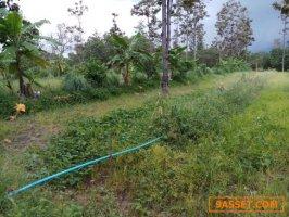 ขายที่ดินเป็นสวนผสมเกษตรพอเพียง 5 ไร่ กว่าๆ ขายยกแปลง 1.5 ล้าน