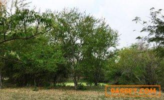 ขายที่สวยทำเลดี สวนมะขาม เนื้อที่ 36 ไร่  ใกล้เขื่อนป่าสักฯ จังหวัดลพบุรี