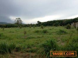 ขายที่สวน ปลูกทุเรียนพันธุ์พวงมณี ตำบลบ้านแลง จังหวัดระยอง เนื้อที่ 54 ไร่ 69 ตรว.