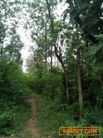 ขายที่ดิน 150 ไร่ ( สวนป่าสัก ) ต.พังเทียม อ.โนนไทย จังหวัดนครราชสีมา