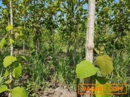 สวนสักทอง 5พันต้น  เกือบ20ไร่ มีโฉนด สวนผึ้ง ราชบุรี  ติดสถานปฏิบัติธรรมจันทสโร