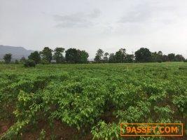 ขายที่ดิน พร้อมพืชพันธ์เกษตร เนื้อที่ 36 ไร่ ด้านหน้าติดถนนหลักเชียงใหม่พร้าว