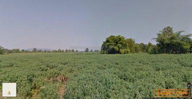 ขายที่ดิน เพชรบูรณ์ แปลงใหญ่ 187 ไร่ น้ำร้อน  วิเชียรบุรี  เหมาะทำโรงงาน