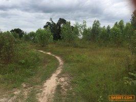 63923   ขาย ที่ดินเปล่า ติดแม่น้ำมูล ขนาด 50 ไร่ 3 งาน 70 ตารางวา  อ.สตึก  จ.บุรีรัมย์