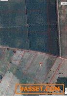 ขายที่ดินพื้นที่สีเขียว อ.แปลงยาว ฉะเชิงเทรา ขนาดพื้นที่ 16ไร่3งาน3ตารางวา