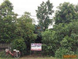 FOR SALE : ที่ดินเปล่า 334 ตารางวา ติดถนนเมนหลักหมู่บ้าน บ้านป่ายาง หมู่2 ต.ศรีค้ำ อ.แม่จัน จ.เชียงราย