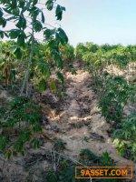 ขายที่ดิน 9 ไร่ ติดถนนภายในหมู่บ้าน บ้านหนองแวง ท่าพระ เมือง ขอนแก่น