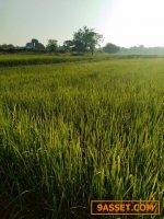 ขายที่ดิน 8 ไร่ ติดคลองน้ำ ติดลำห้วย เหมาะสำหรับทำบ้านสวน น้ำดีทั้งปี หนองแวง ท่าพระ ขอนแก่น