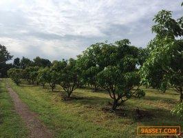 ขายสวนผลไม้ติดคลอง 20-3-06 ไร่ พร้อมบ้านพัก อ.ศรีเทพ เพชรบูรณ์ ใกล้ อบต.ประดู่งาม