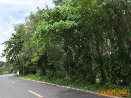 ขายที่สวนยางพารา 8-2-62.6 ไร่  อ.ถลาง ภูเก็ต ติดกับสถานีอนามัยบ้านไม้ขาว ใกล้สนามบินภูเก็ต