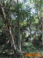 LS-8269-ขายที่ดิน-75-ตรว.--ซอยตะเกียง-ป่าคลอก-ตำบลป่าคลอก-จังหวัด-ภูเก็ต-�