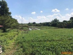 ขายที่ดิน 2 ไร่ 40 ตารางวา อ.สันป่าตอง จังหวัดเชียงใหม่ ติดถนน เดินทางสะดวก