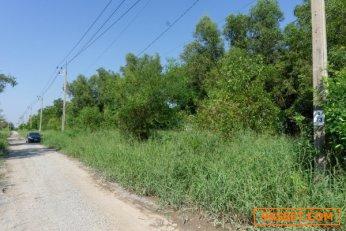 ขาย ที่ดินเปล่า 120 ตร.วา อำเภอไทรน้อย บนถนนเส้น 346 เหมาะสร้างบ้าน