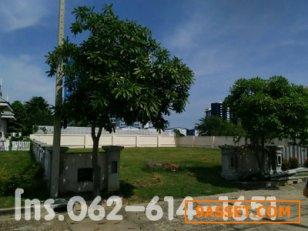 ขายด่วน!ที่ดินเปล่า เหมาะทำที่อยู่อาศัยที่มีความเป็นส่วนตัว 206ตรว. (2งาน6.5ตรว) บรรยากาศร่มรื่น ใกล้ทะเลชะอำ โอเรียนทอล บีช (Oriental Beach) เพชรบุรี