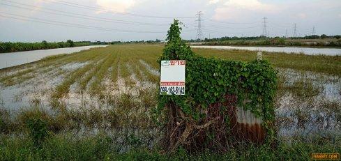 ขายถูกมากที่ดินตำบลขุนศรี นนทบุรี เนื้อที่ 17 ไร่กว่า มี 2 แปลงที่สวยมากๆ  ที่ติดถนน