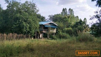 ขายที่ดิน 5 ไร่ ด้านหลังติดตลอง  เหมาะสำหรับทำบ้านสวน บ.ศิลา อ.เมือง จ.ขอนแก่น