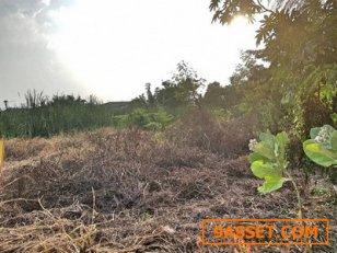 ขาย ที่ดิน ซอยลำลูกกา3 56 ตรว. เหมาะทำที่อยู่อาศัย ถูกมาก ถมสูงกว่าถนน 50ซม.