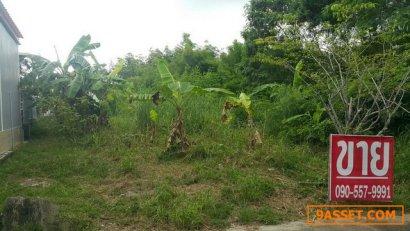 ขายที่ดิน 139 ตรว. ใกล้อุทยานฝั่งวัดสำเภาทองต.เพ จ.ระยอง