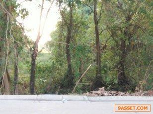 ขายที่ดิน   3 ไร่  1  งาน  84  ตารางวา ราคา  19  ล้านบาท   ตำบลคลองข่อย  จังหวัดนนทบุรี