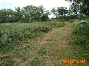 ที่ดินพร้อมสวนสับปะรด 2 แปลงรวมกัน 18-0-65 ไร่ต.บ้านเสด็จ อ.เมือง จ.ลำปาง