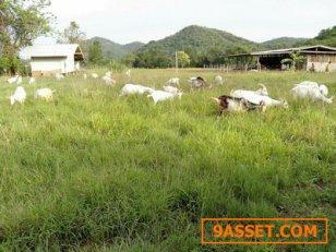 ขายที่ดิน 6-3-40ตรารางวา อำเภอเมือง จ.ราชบุรี ที่ดินอยู่หลังวัดเขาลอยมูลโค ห่างจากถนนเพชเกษม1.5กม