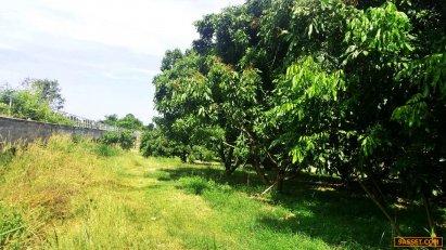 ขายสวนลำใย-มะยมชิด  บ.เทพนิมิต ต.เทพนิมิต แบ่ง10หรือ15ไร่ฯละ3แสน ขายด่วน สวนลำใยและมะยมชิด  บ้าน เทพนิมิต ตำบล เทพนิมิต อำเภอ โป่งน้ำร้อน จันทบุรี ขนาด32ไร่แบ่งขาย10 ไร่หรือ15ไร่ขายไร่ละ3แสน มีระบบน้ำของชลประทาน บ้านกลางสวน ลำธารธรรมชาติ ผ่านหลังสวนมีบ่อพ