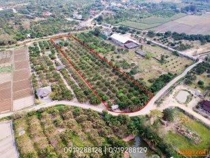 ขายด่วน ที่ดินสวนผลไม้พร้อมเก็บ 4-3-20 ไร่ อ.แม่วาง ราคาไม่แพง