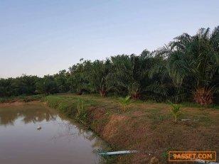 ขายที่ดินเป็นพื้นที่ปลูกปาล์ม 2แปลงติดกัน มีลำห้วยผ่าน มีสระน้ำ อยู่ปราณบุรี ประจวบ