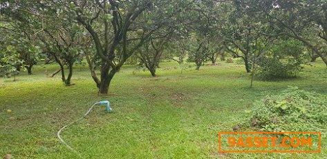 ขายที่ดิน ที่สวยๆ พร้อมสวนผลไม้ ขนาด เนื้อที่ 4 ไร่ 3 งาน 66 ตารางวา เมืองนครนายก