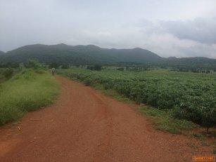 ขายที่ดิน สวยมาก ที่ดินติดต่อกันเป็นผืนเดียวกัน จังหวัดลพบุรี