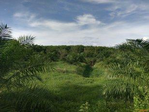 ขายที่ดิน สวนยางพารา ที่ดินตั้งอยู่เส้น สุราษฎร์ฯ-นครศรีฯ จังหวัดนครศรีธรรมราช