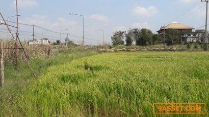 ขายที่ดิน 33-1-76 ไร่ ติดถนนธัญบุรี-วังน้อย ต.คลองเจ็ด อ.คลองหลวง จ.ปทุมธานี