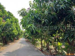 ที่ดิน สวนผสม นนทบุรี 2 ไร่ 60 ตร.ว แยกบางพลู ราชพฤกษ์