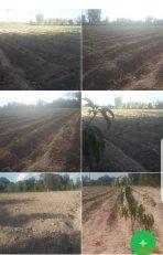 ขาย ที่ดิน ขนาด 10 ไร่ ติดถนน เหมาะสำหรับปลูกสร้างที่พัก และทำสวน ใกล้โรงเรียน อำเภอหนองหาน จังหวัดอุดรธานี