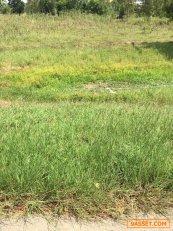 ขายที่ดินแปลงสวย ที่ดิน 10ไร่-3งาน-26ตรว อ.เลาขวัญ จ.กาญจนบุรี