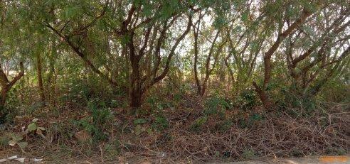 ขายที่ดิน ขนาด 88 ตร.ว.อยู่ใกล้สวนน้ำ และวัดพระนอนปูคา