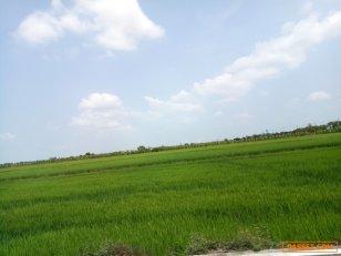 ขายที่ดิน 100 ไร่  ถนนบางบัวทอง -สุพรรณบุรี  095 471 9059