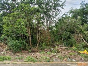 ขาย ที่ดินเปล่า เนื้อที่ 197.5 ตร.ว. ซอย อนามัยโรงกระโจม ถนน บ้านกล้วย-ไทรน้อย บางบัวทอง นนทบุรี